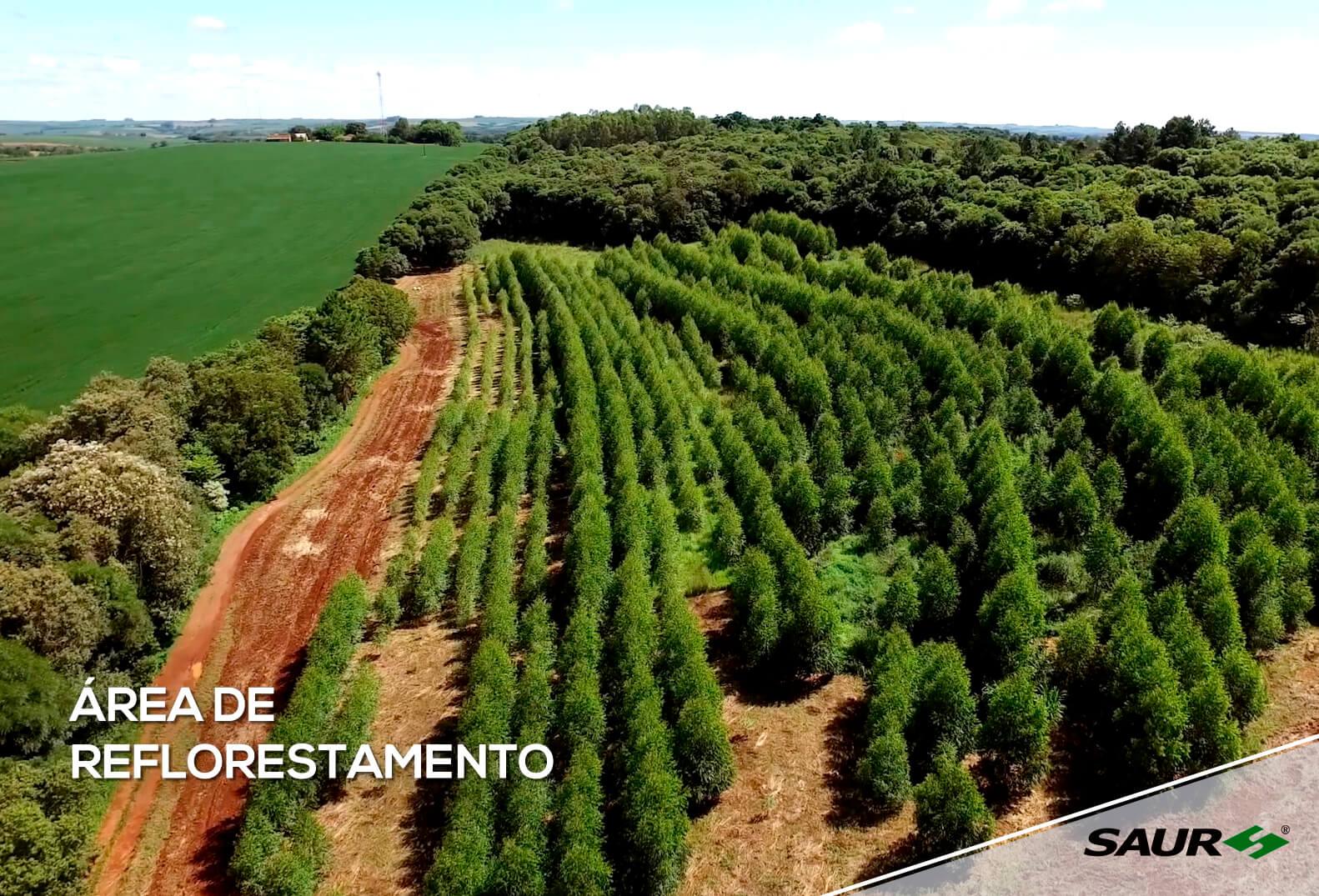 Preservação do Meio Ambiente - Reflorestamento
