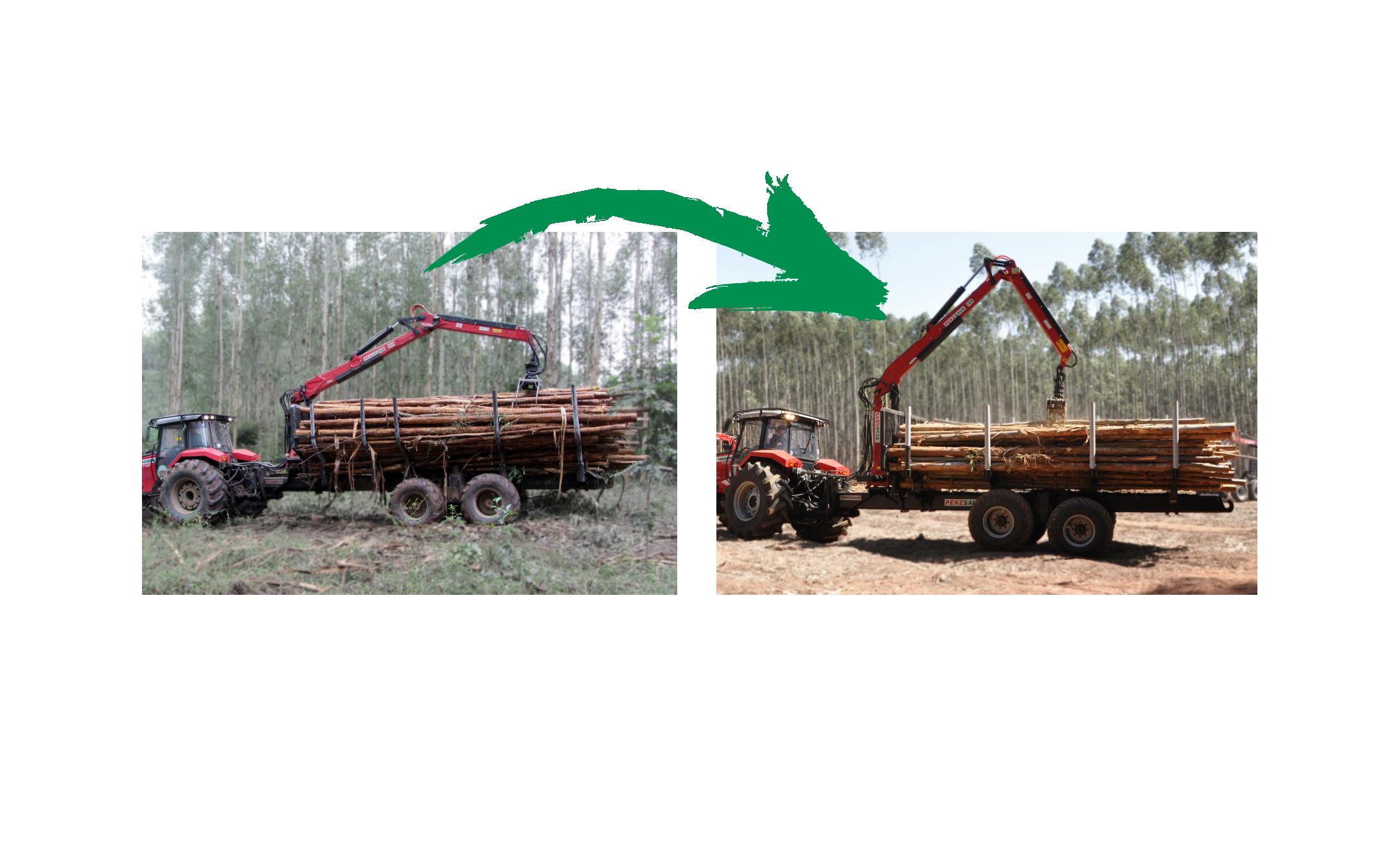 Reforma Florestal